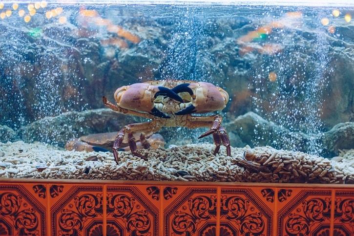 Dancing Lobster Crab Viu